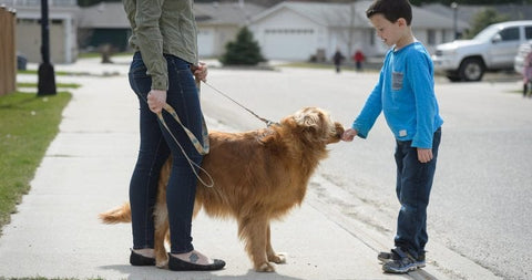 boy patting golden retriever