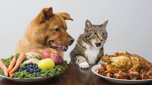 dog and cat eating human food
