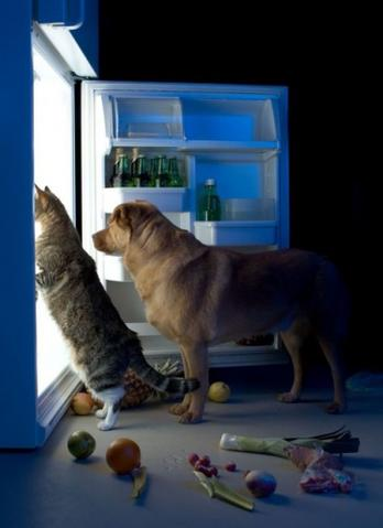 cat and dog looking in refrigerator
