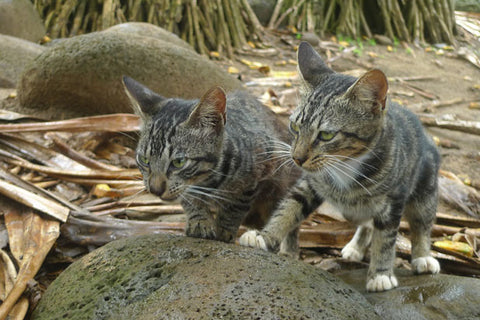 2 cats behind a rock
