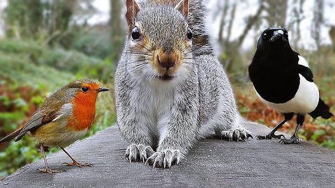squirrel with birds