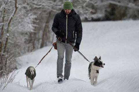 man walking dogs in snow