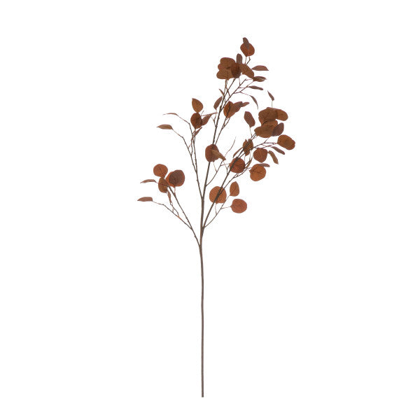 Eucalyptus Leaf Branch - Brown