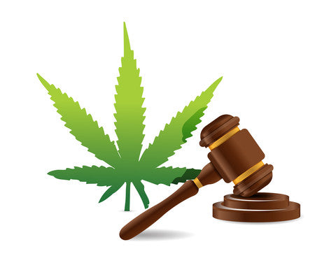 Marijuana Law Reform on the Rise for Upcoming Year 2016