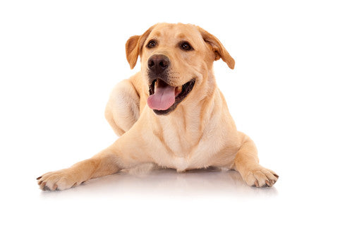 Cannabinoid Canine: CBD Can Help Your Dog