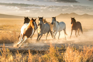 WILD HORSE COLLECTION