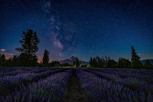 Milky Way, Lavender Fields Landscape Photography by Rob's Wildlife