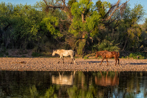 Two horses near river - Wildlife water reflection art