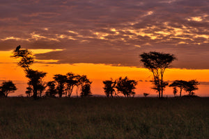 Serengeti Sunset, orange sunset silhouette trees, landscape photography by Rob's Wildlife