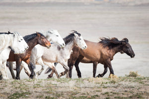 Leader of the pack, horse photography