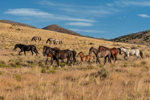 Wild Horse Fine Art Photography Print by Rob's Wildlife