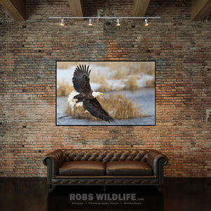 Soaring Bald Eagle office wall art by Rob's Wildlife