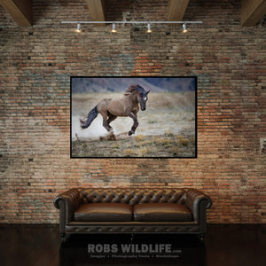 Wild Horse Charging by Rob's Wildlife