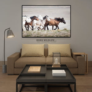 Horse photography art by Rob's Wildlife