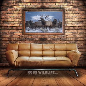 large bull elk art above couch - elk photography art