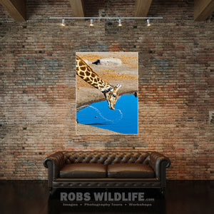Giraffe wall art, giraffe fine art by Rob's Wildlife