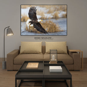 Bald Eagle Photography Print