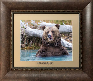 Big Grizzly Bear Close up photography print