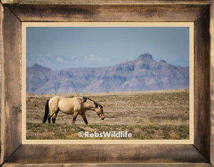 Buckskin Mustang, Buck skin wild horse art by Rob's Wildlife