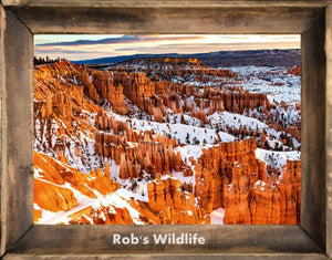 SNOWFALL AT BRYCE CANYON, Red Rock in winter