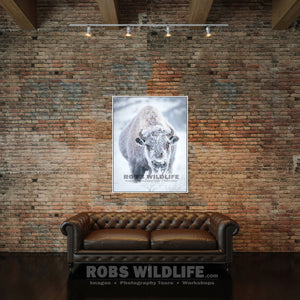 Snow covered bison, snowy bison, rustic buffalo art by Rob's Wildlife