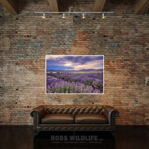 Purple lavender fields - Purple landscape art by Rob's Wildlife