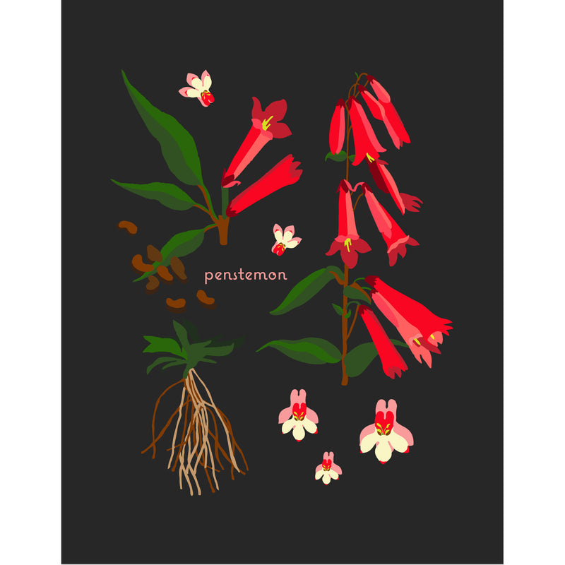 """Penstemon"" Desert Botanical Card by Holli Zollinger"