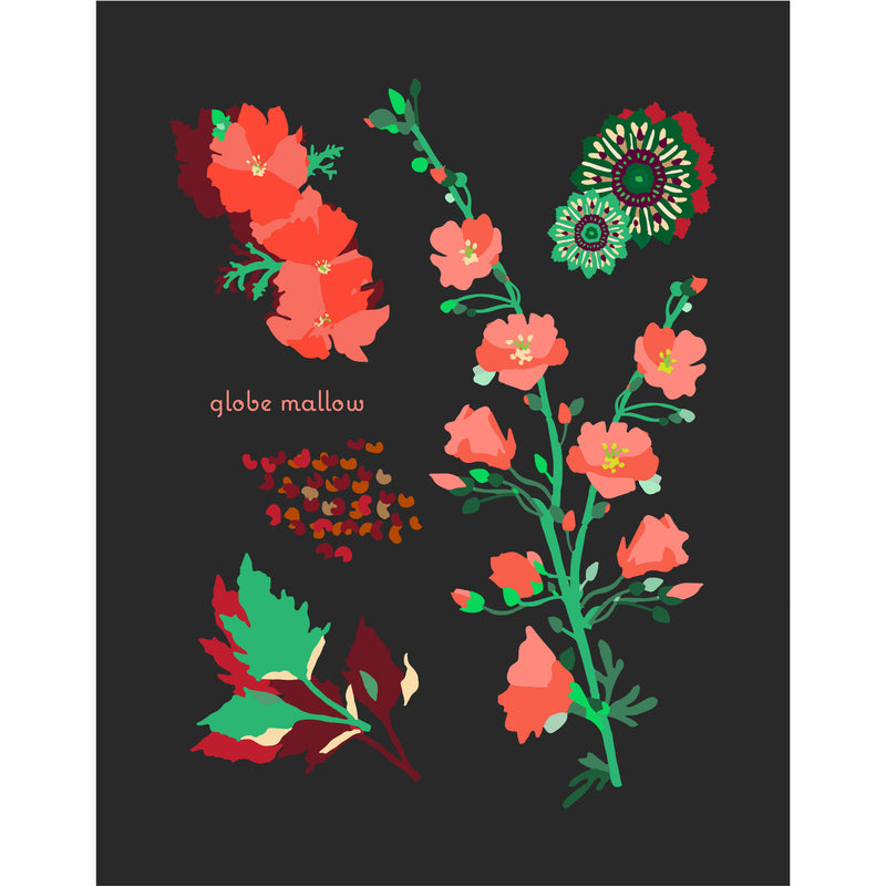 """Globe Mallow"" Desert Botanical Card by Holli Zollinger"