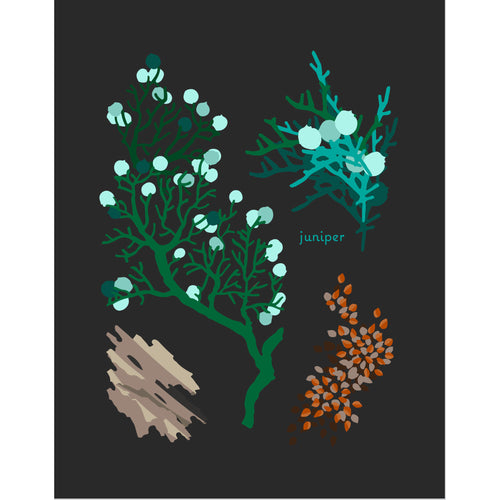 """Juniper"" Desert Botanical Card by Holli Zollinger"