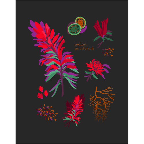 """Indian Paintbrush"" Desert Botanical Card by Holli Zollinger"