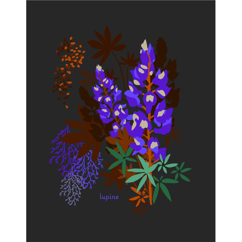 """Lupine"" Desert Botanical Card by Holli Zollinger"
