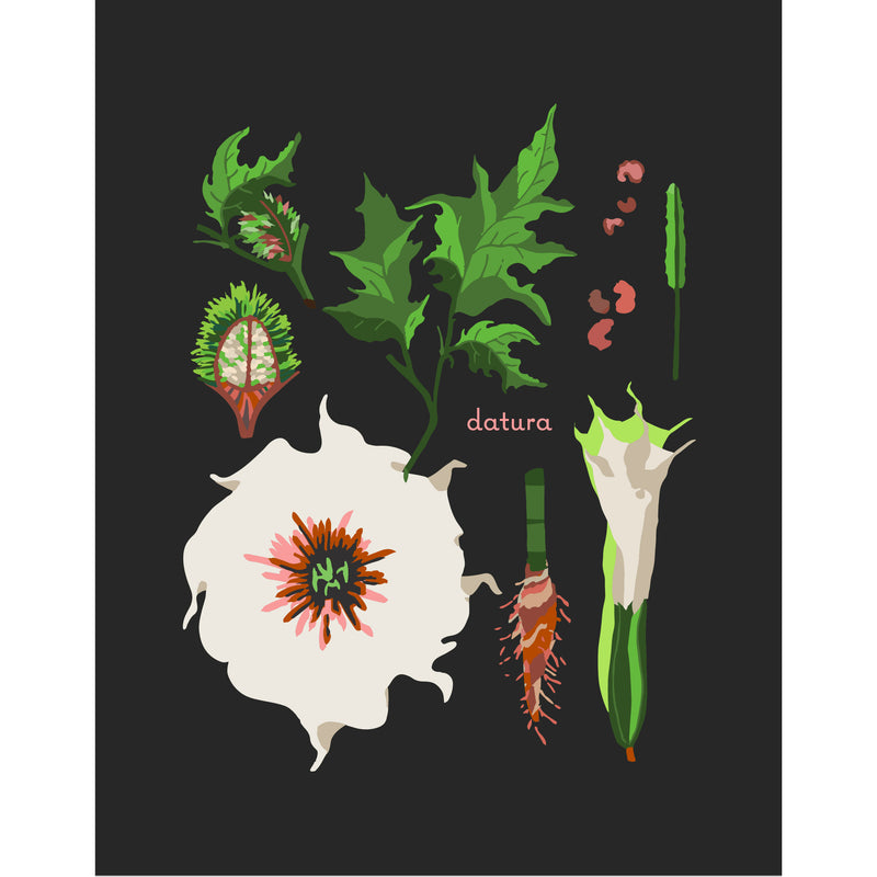 """Datura"" Desert Botanical Card by Holli Zollinger"
