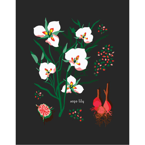 """Sego Lily"" Desert Botanical Card by Holli Zollinger"