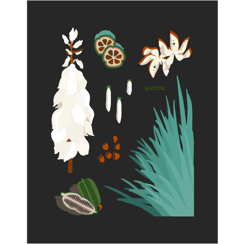 """Yucca"" Desert Botanical Card by Holli Zollinger"