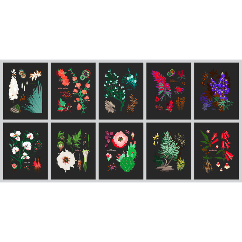 Desert Botanical Set of Cards by Holli Zollinger