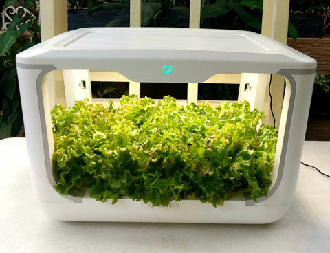 Smart Garden Grow Box ( Greenjoy )