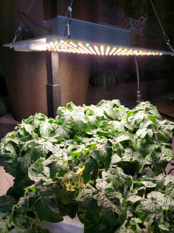 Quantum Board LED Growlight 100w
