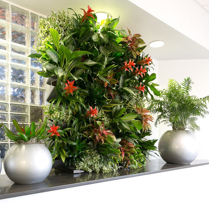 Create an attractive display that combines green plant walls with sphere planters.