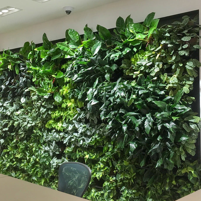 Plantups Green Wall Vertical Garden uses a sub-irrigation watering system to keep plants beautiful and minimize watering.
