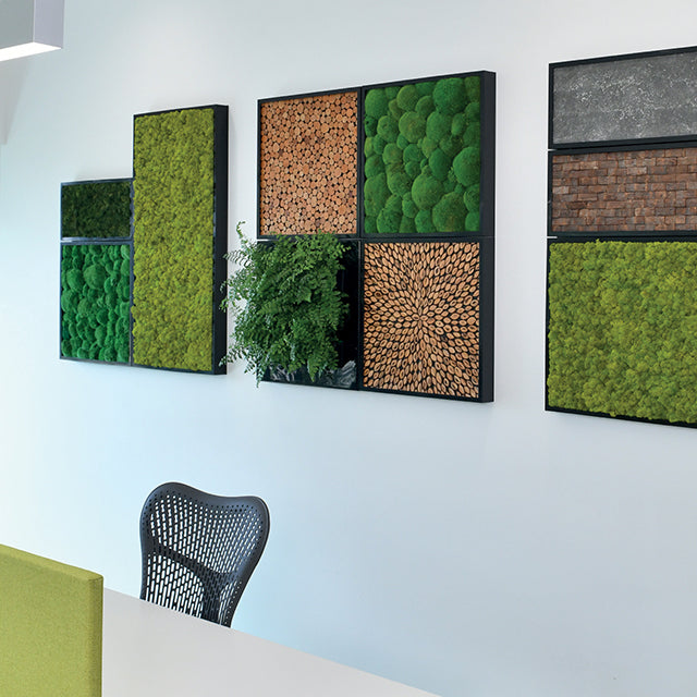 Moss walls can be combined with living plants in our modular green wall system.