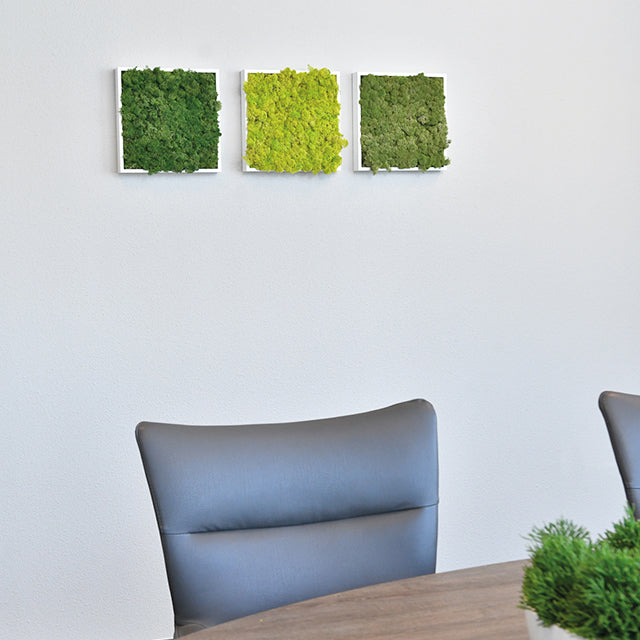 Use the 12 inch by 12 inch moss minis for a attractive addition to any wall.
