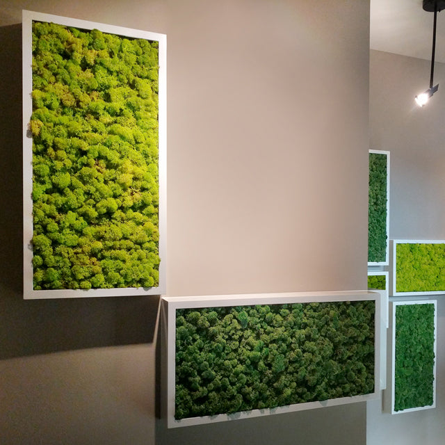 12x24 reindeer moss frames placed in hallway. Moss walls are low maintenance because the moss is preserved and does not require light or watering.