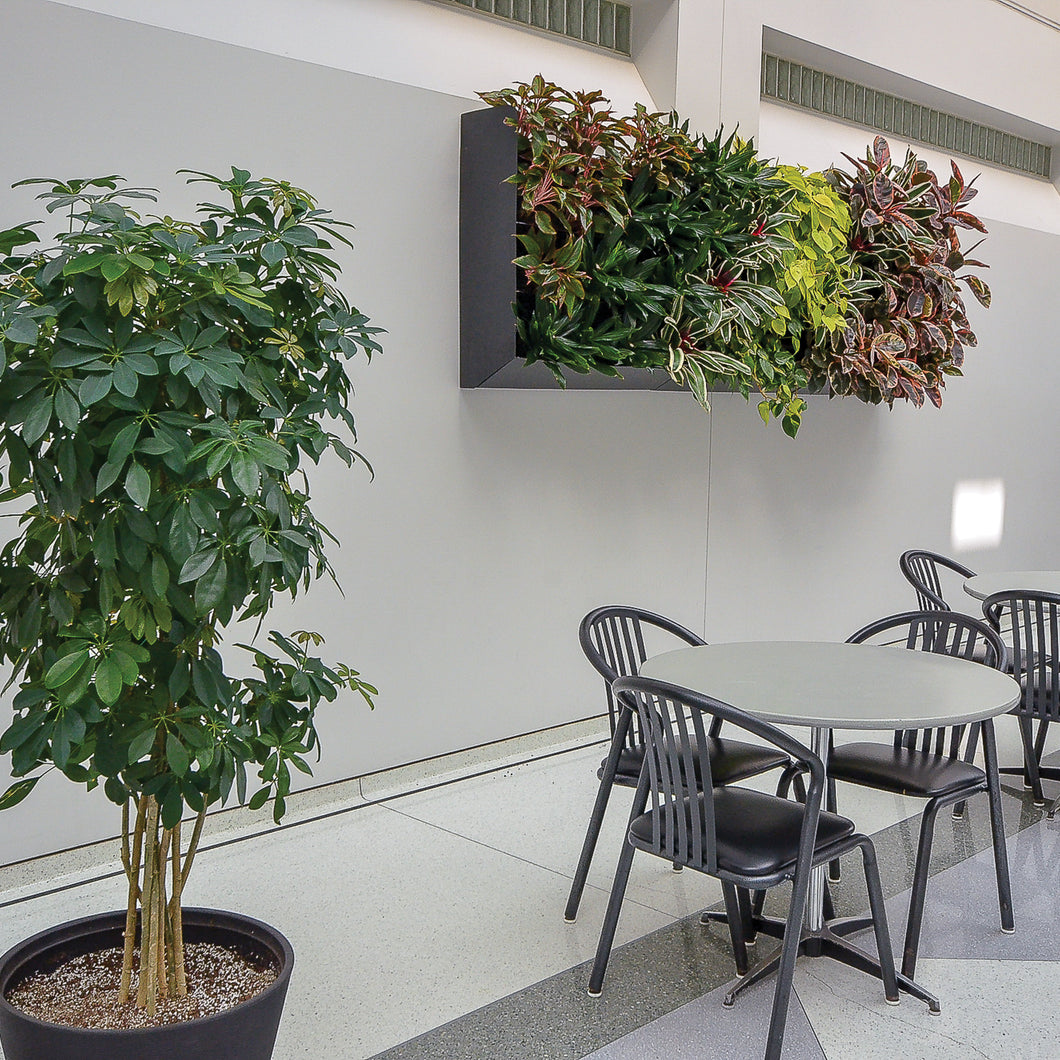 Boost creativity and reduce stress with indoor vertical plants walls. A living wall adds the benefits of plants without taking up floor space.