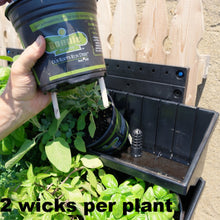 Our sipper wicks - two per plant are used so that our  living green walls operate without plumbing or drainage.