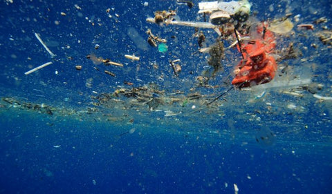 Floating Plastic at the Surface of the Ocean | Photo Credit blueoceansociety.org