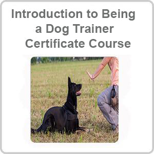 Introduction to Being a Dog Trainer Certificate Course