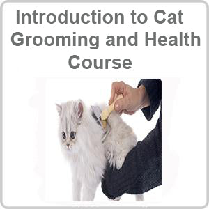 Introduction to Cat Grooming and Health CPD Accredited Course