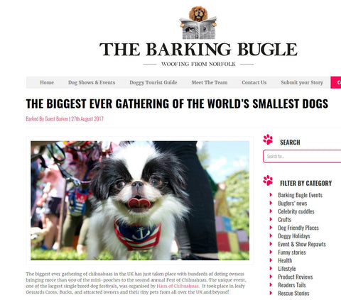 Barking Bugle Fest of Chihuahuas
