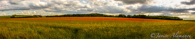 L124818pan Summer Colours