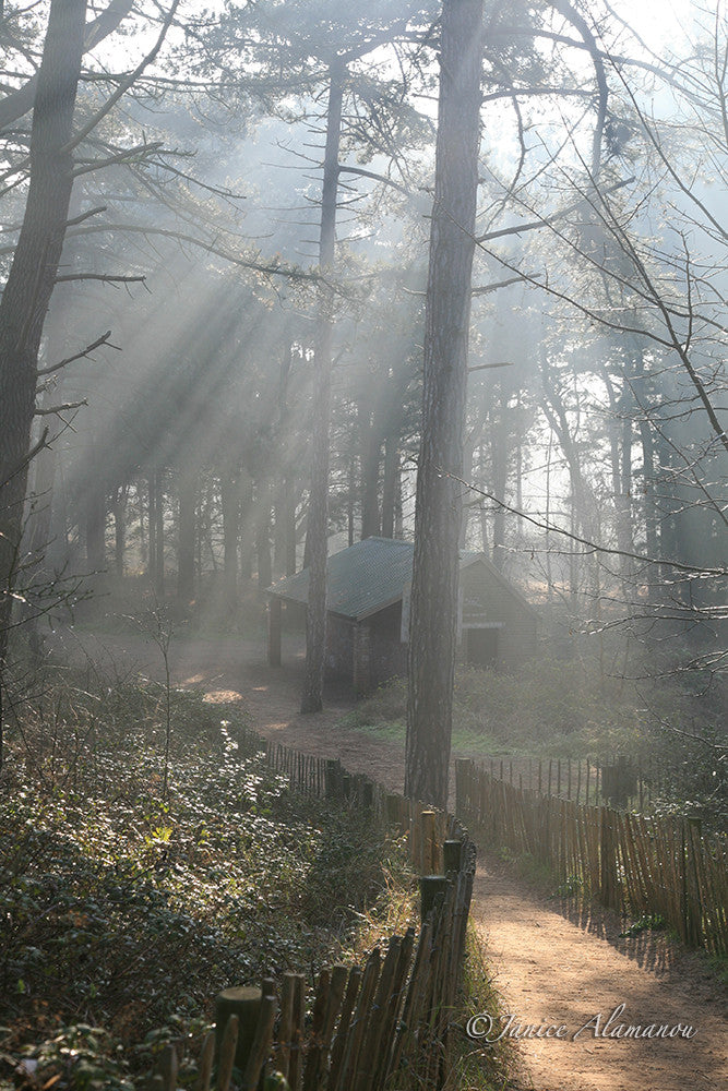 L159 Sunbeams into Misty Woods